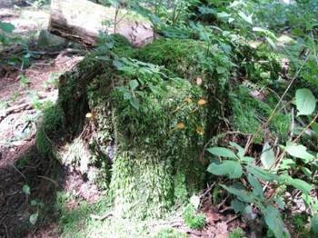 ちいさな森web.jpg